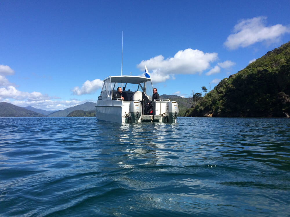 Aluminium Boat In Marlborough Sounds With Blenheim Dive Centre NZ