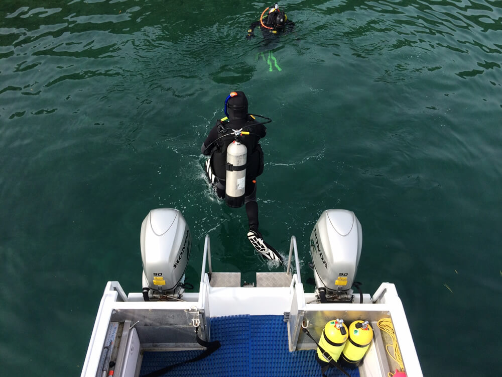 Aluminium Boat In Queen Charlotte Sounds With Blenheim Dive Centre