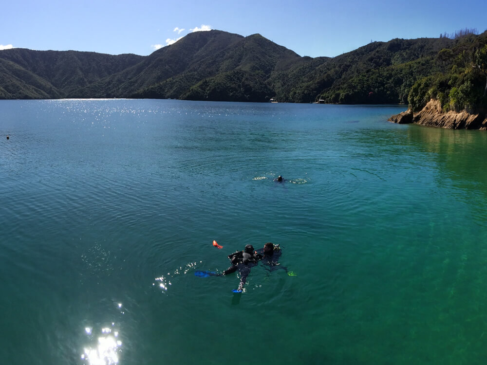 Diving In Queen Charlotte Sounds With Blenheim Dive Centre