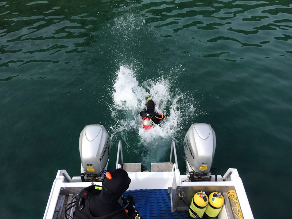 Scuba Diving Off Boat In Marlborough Sounds With Blenheim Dive Centre