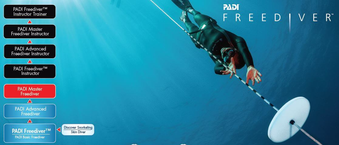 Flowchart Of PADI Freediving Courses